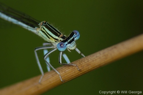 Creepy-Crawlies - Photo 34